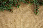 Christmas border from branch — Stock Photo