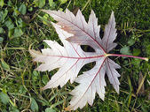 Autumn: leaf — Photo