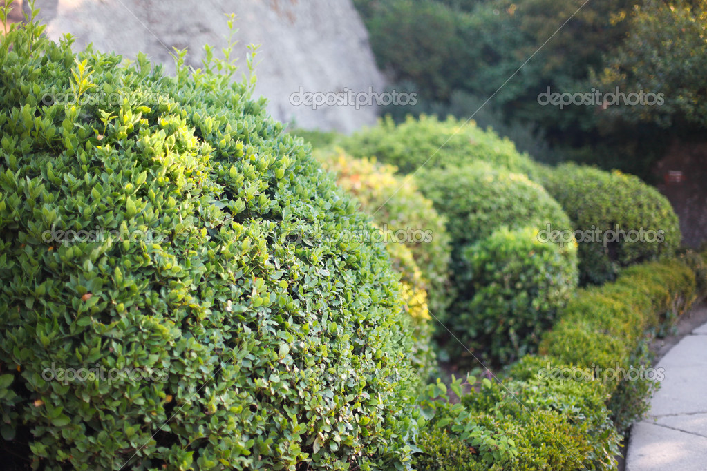 landschaftsplanung garten str ucher stockfoto 7100533. Black Bedroom Furniture Sets. Home Design Ideas