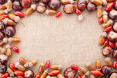 Assorted acorns, chestnuts and dogrose frame on fabric texture b — Stock Photo