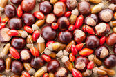 Assorted acorns, chestnuts and dogrose background — Stock Photo