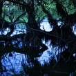 Abstract swamp trees - Stock Photo