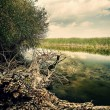 Fallen tree on the river bank — Stock Photo