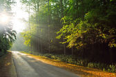 Sunny road — Stock Photo