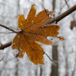Frosty leaf — Stock Photo