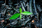 Burnt vegetation — Stock Photo