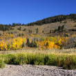 Autumn scene in Wyoming — Stock Photo