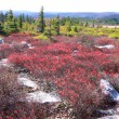 Dolly sods — Stock Photo