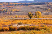 Autumn landscape in Wyoming — Stock Photo