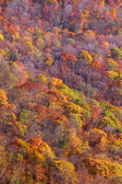 Autumn trees on the hill — Foto Stock