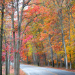 Road in forest in autumn — Stock Photo