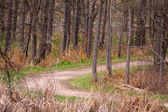 Forest trail — Stock Photo