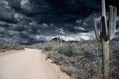 Saguaro national park — Stock Photo