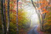 Foggy autumn drive — Stock Photo