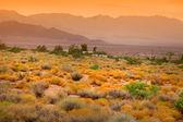 Scenic desert landscape — Stock Photo