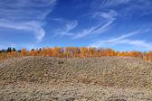 Autumn trees on the hill — Stock Photo
