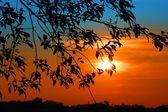 Sun set — Stock Photo
