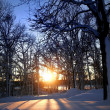 Winter scene — Stock Photo #7854867