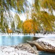 Scenic winter landscape — Stock Photo #7855028