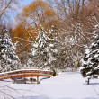 Scenic winter landscape — Stock Photo