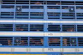 Transporte de bezerro — Foto Stock
