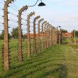 Royalty-Free Stock Photo: Auschwitz Birkenau