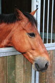 Horse in stable — Stockfoto