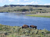 Bisons on the lakeside — Stock Photo