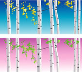 Vector birches — Stock Vector
