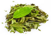 Dried mint leaves — Stock Photo