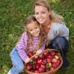 秋のりんご狩り時間 — ストック写真