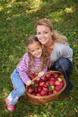 Apple picking time in autumn — Stock Photo