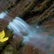 Autumn stream — Stock Photo #7447050