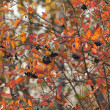 Autumn blur - Stock Photo