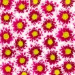 Crimson Chrysanthemums — Stock Photo
