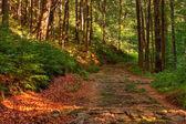 Viejo camino pedregoso — Foto de Stock