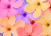 Close-up frame of a beautiful flowers on — Stock Photo