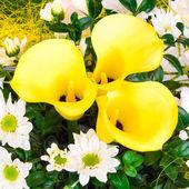Yellow Caliliy — Stock Photo