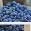 Blue grapes — Stockfoto