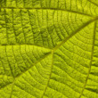 Green leaf — Stock Photo #6950694