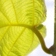 Green leaf — Stockfoto #6950700