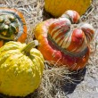 Pumpkins — Foto Stock #6952549