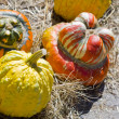 Pumpkins — Stock Photo #6952549