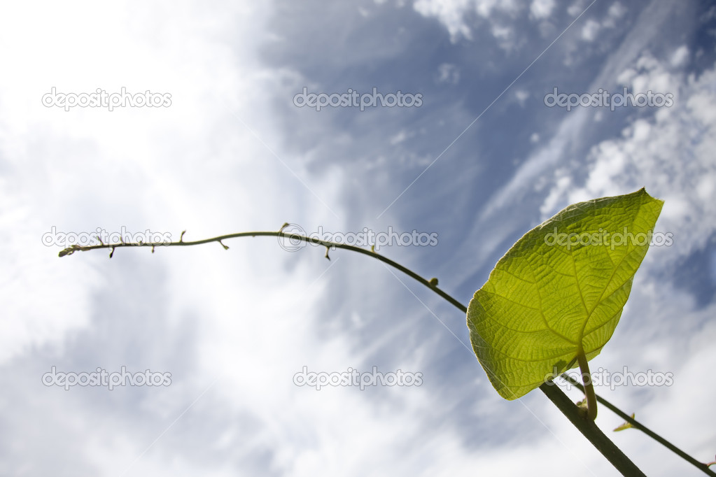 Green leaf  Stock Photo #6950665