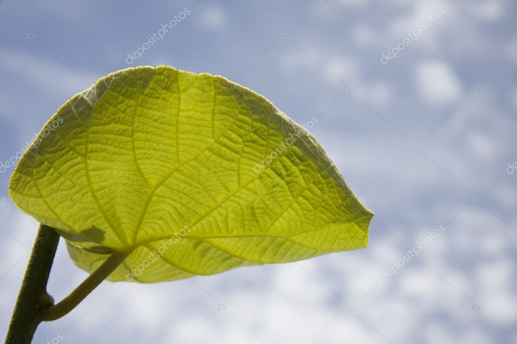 Green leaf  Stock Photo #6950678