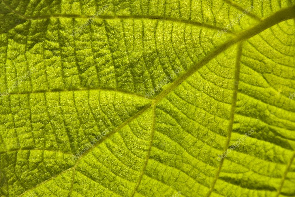Green leaf — Foto de Stock   #6950694