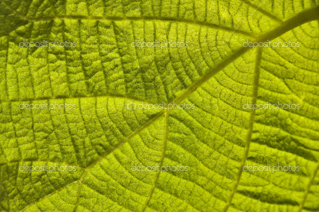 Green leaf  Photo #6950694