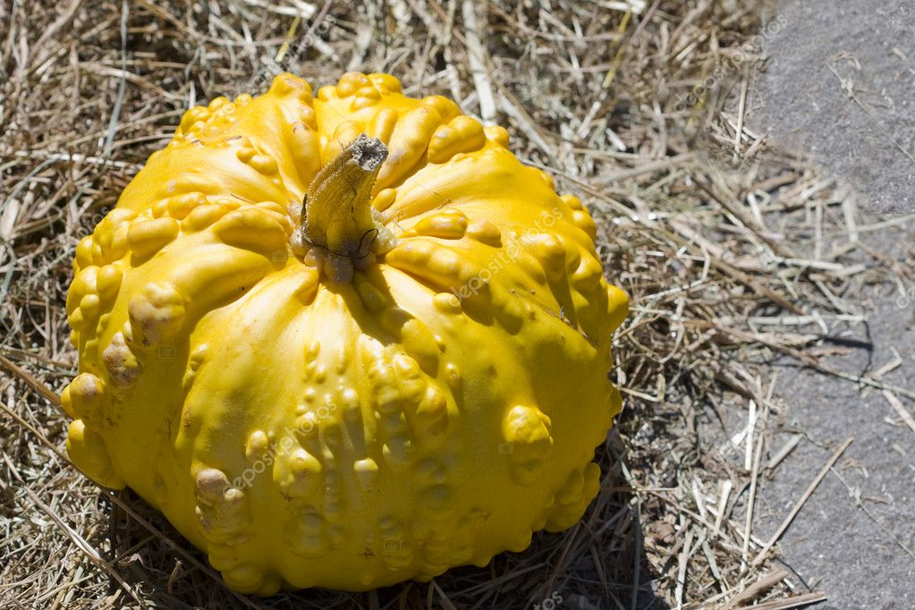 Pumpkins — Foto de Stock   #6952540