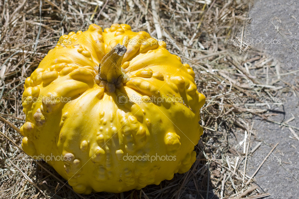 Pumpkins — Stockfoto #6952540