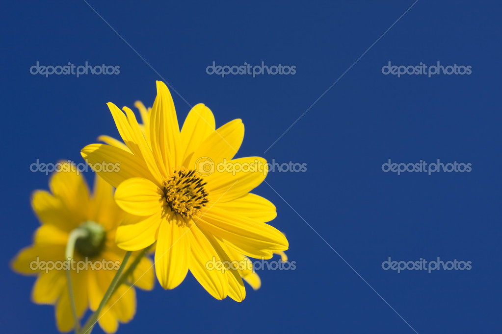 Flowers — Stock Photo #6953096